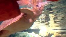 Rescatada una tortuga boba con anzuelos en la boca
