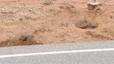 Tres agricultores plantan cadáveres de conejos